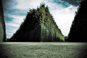 1083976_labyrinth.jpg