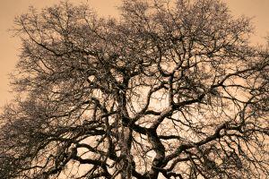 944870_oak_tree.jpg